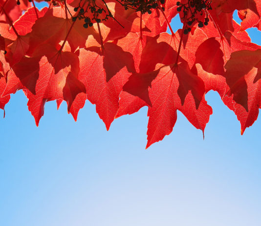 Why do leaves change colour
