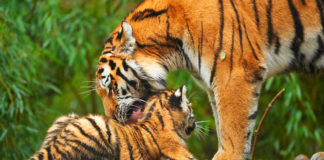 From Tiger To Free-Range Parents – The Pros And Cons Of Popular Parenting Styles